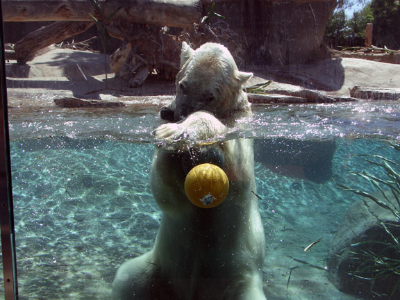 Playful polar bear 2