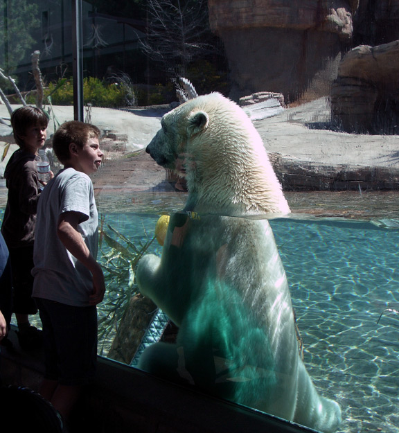 Playful polar bear 4