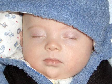 112907-asleep-after-walk-close-up.jpg